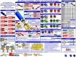 Plakat: Sichtprüfung von Crimpverbindungen - DE